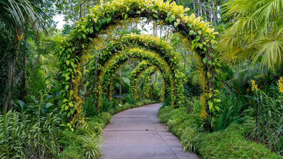 A greenery path to upscale your garden